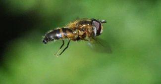 animales aéreos pequeños